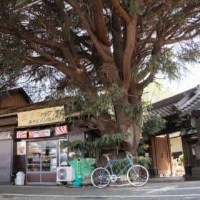 tokyobike トーキョーバイク