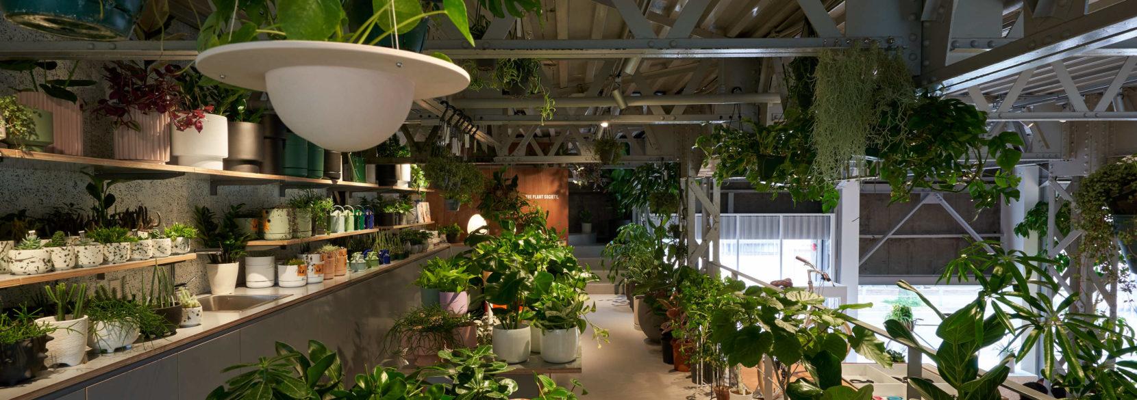TOKYOBIKE TOKYOB PLANTS SOCIETY